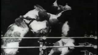 Download The Boxing Cats (Prof. Welton's) Video
