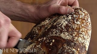 Download Baking bread at Tartine Bakery - Annals of Gastronomy - The New Yorker Video