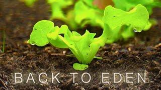 Download How to Grow a Vegetable Garden - Back To Eden Organic Gardening Film Video