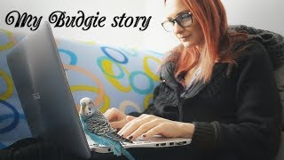 Download My Budgie story Video