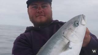 Download WESTERN WATERS - DOWNSIZED GEAR AND WILD YELLOWTAIL FISHING Video