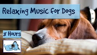 Download OVER 8 HOURS of Relaxing Music for Dogs and Puppies! Calm Down Stressed or Anxious Dogs and Puppies Video