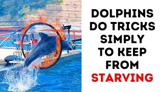 Download 8 Reasons to Never See a Dolphin Show Again Video