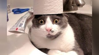 Download CRAZY CATS vs PAPER, get ready for SUPER LAUGHING! - Funny CAT VIDEOS Video