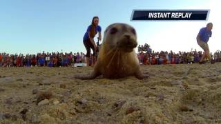 Download Sea Salt the Seal Returns to the Wild After Months in Rehab! Video