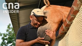 Download Horses That Heal: A Second Chance At Life For The Unwanted Video