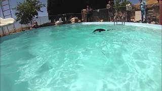 Download Otter Pool Party! Video