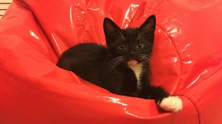 Download Kittens and Human Love New Beanbag! Thank you Video