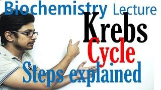Download Krebs cycle Video