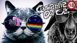Download O wyższości psów nad kotami, homo-terrorze, przedszkolakach i sposobie na komary [CZARNE OWCE] [#18] Video