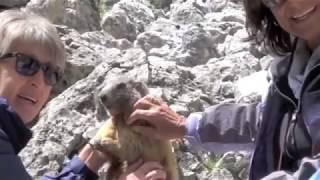 Download una marmotta per amica Video