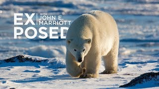 Download EXPOSED Ep. 10: Wildlife Photography | Expedition to the Arctic! Video