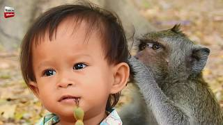 Download Monkey and Kid/ Monkey looks after kid/ Animal Loves Human being Youlike Monkey Video