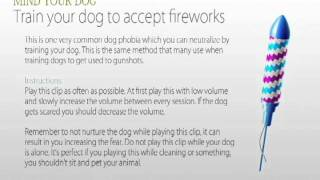 Download Train your dog to accept fireworks Video