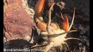 Download primitive technology :catch the most unique giant crab - Cooking crab recipe - Eating delicious Video