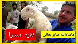 Download لاہور بکرے جا رہے ہیں Video