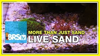 Download Week 12: Proof: Live Sand isn't as dull as you thought! | 52 Weeks of Reefing Video
