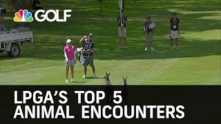 Download LPGA Top 5 Animal Encounters | Golf Channel Video