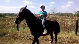 Download llanero a caballo Video