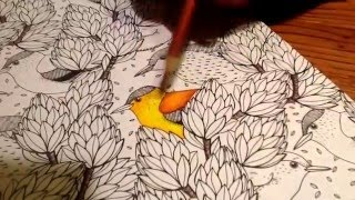 Download How to use colored pencils on adult coloring books. Video