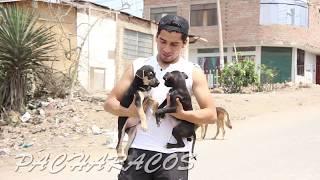Download RETOS PACHARACOS (5 Mil Suscriptores) | ChiquiWilo Video