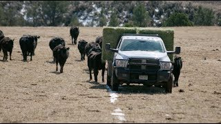 Download Martin Ranch | On The Job | Ram Heavy Duty Truck Video