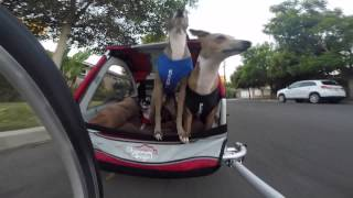 Download My Dogs' Bike Trailer Video