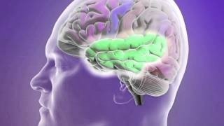 Download Classification of Epileptic Seizures Video