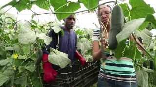 Download Priscilla Tango - Mkulima wa mboga mboga kutoka Arusha Video