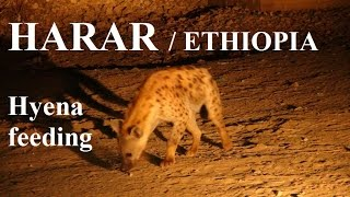 Download Ethiopia /Harar (Hyena feeding) Part 40 Video