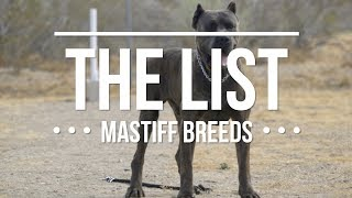 Download THE LIST: TOP MASTIFF DOG BREEDS Video