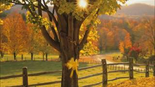 Download Tie a yellow ribbon 'round the ole oak tree Lyrics Fixed Video
