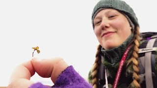 Download Meet the World's Tiniest Trees! | From Plant to Planet with Nellie Nilsen | BBC Earth Video