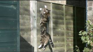Download Gravity Defying Cat - The Slow Mo Guys Video