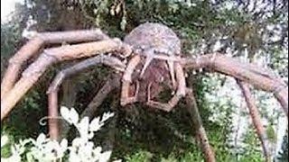 Download WEIRDEST Insect & Spider Cryptids Video