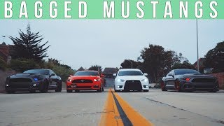 Download BAGGED AND SUPERCHARGED MUSTANGS Video