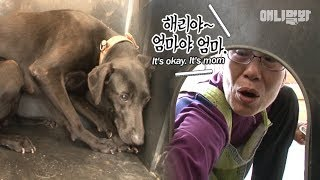 Download 마음의 문 ㅣ Dog says ″Humans Are My Biggest Fear″ Video