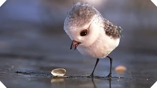 Download PIPER - Disney Pixar Short (Animation Teaser - 2016) Video