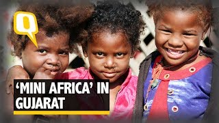Download Ignored and Forgotten, The 'Mini Africa' of Gujarat | The Quint Video