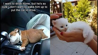 Download Cute baby animals Videos Compilation cute moment of the animals - Soo Cute! #42 Video