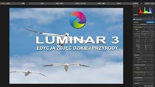Download Edycja zdjęć dzikiej przyrody w Luminar 3 Video