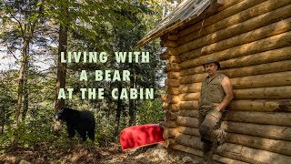 Download Living with a Blackbear at the Cabin in the Forest and Installing Windows Video
