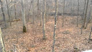 Download Can you see the deer? Video