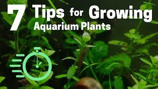Download 7 Tips for Growing Freshwater Plants in an Aquarium Video