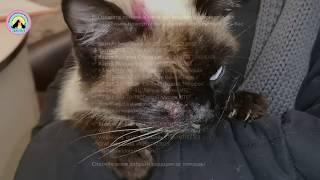 Download У этой кошки такой недуг, что мурашки по коже Но мы попытаемся ей помочь we help the cat Video