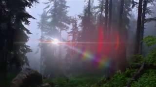 Download Briga o šumama vidljiva iz svemira! Video
