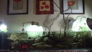 Download 6 foot long natural river aquarium Video