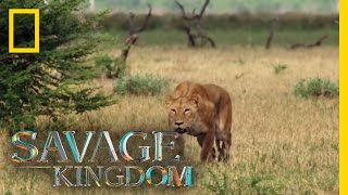 Download Matsumi, the Queen! | Savage Kingdom Video