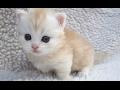 Download Top 10 Cute Baby Animal Videos 2017 [CUTE] Video