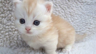 Download Top 10 Cute Baby Animal Videos 2017 [CUTE] Video
